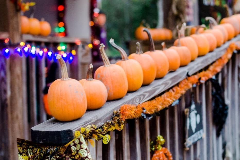 The Pumpkin Patch Express: October 19th-21st